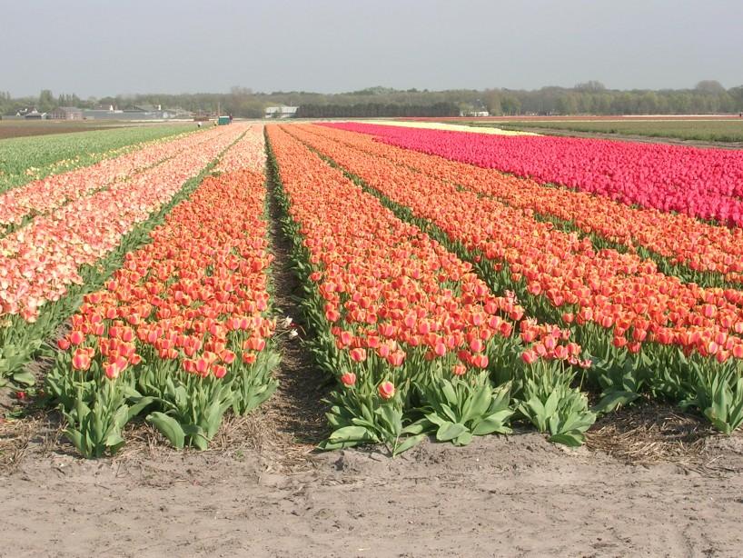 Apeldoorns Elite field
