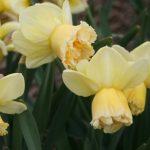 Narcis Art Design