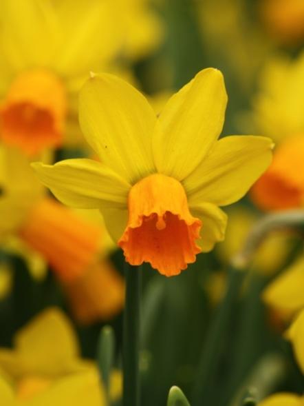 Narcissus Jetfire