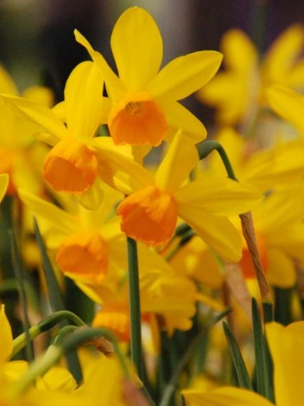 Narcissus Puppet