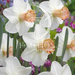Skype Narcissus