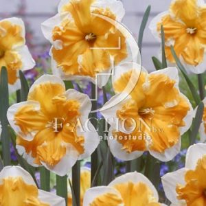 Narcissus Sovereign